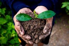 Mão para a plantação de árvores Foto de Stock