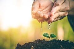 Mão para plantar árvores de volta à floresta Fotos de Stock Royalty Free