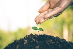 Mão para plantar árvores de volta à floresta Fotografia de Stock Royalty Free
