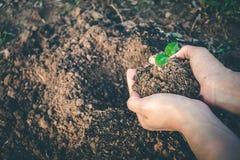 Mão para plantar árvores de volta à floresta Imagens de Stock Royalty Free