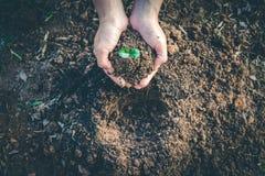 Mão para plantar árvores de volta à floresta Foto de Stock