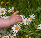 A mão pequena da criança toca em estrados na grama fotos de stock