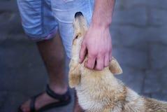 Mão que afaga o cão fotos de stock royalty free