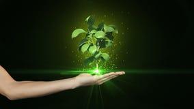 Mão que apresenta o crescimento digital da planta verde vídeos de arquivo