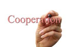 Mão que escreve a cooperação da palavra Imagens de Stock