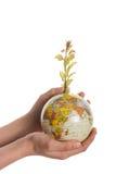 Mão que guarda a árvore no globo Fotos de Stock