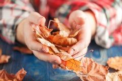 Mão que guarda as folhas de bordo amarelas Fotos de Stock