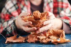 Mão que guarda as folhas de bordo amarelas Fotografia de Stock Royalty Free