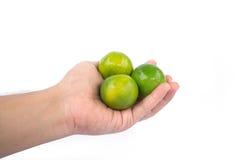Mão que guarda cais verdes Imagem de Stock