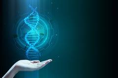 Mão que guarda o ADN azul Fotos de Stock Royalty Free