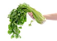 Mão que guarda o aipo verde Foto de Stock