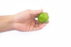 Mão que guarda o cal verde Foto de Stock