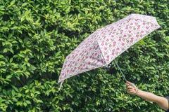 Mão que guarda o guarda-chuva multicolorido na planta verde Imagens de Stock