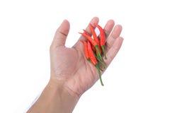 Mão que guarda o pimentão vermelho Foto de Stock Royalty Free
