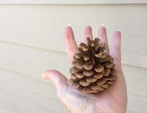 Mão que guarda o pinecone fora Imagens de Stock Royalty Free