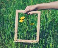 Mão que guarda o quadro no fundo da flor Foto de Stock Royalty Free