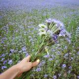 Mão que guarda o ramalhete da flor Imagem de Stock Royalty Free