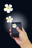 Mão que guarda o telefone esperto com flor do Plumeria Fotografia de Stock Royalty Free