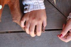 Mão que guarda a pata do cão Fotos de Stock