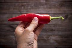 Mão que guarda a pimenta de pimentão encarnado fotografia de stock