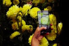 Mão que guarda um smartphone para tomar uma foto da flor fotos de stock