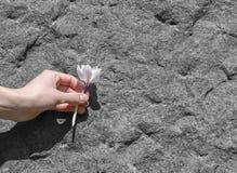 Mão que guarda uma flor arrancada Fotografia de Stock