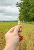 Mão que guarda uma vagem do feijão de soja imagens de stock royalty free