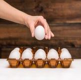 Mão que guardara um ovo Imagens de Stock