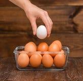 Mão que guardara um ovo Fotos de Stock Royalty Free