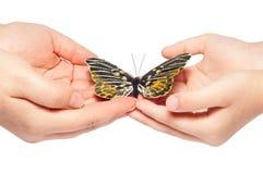 Mão que libera a borboleta Fotos de Stock