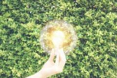 Mão que mantém a ampola contra a parede verde da licença com luz solar falsificada no quadro do globo do fio no salvamento do amb fotos de stock