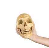 Mão que mantém o crânio isolado no fundo branco foto de stock