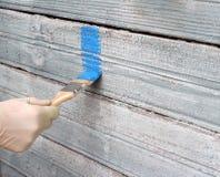 Mão que pinta a parede de madeira azul fotografia de stock royalty free