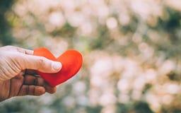 Mão que prende um coração vermelho Imagem de Stock