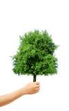 Mão que prende uma árvore Imagem de Stock Royalty Free