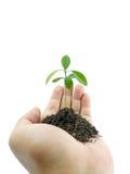 Mão que prende uma planta pequena Foto de Stock Royalty Free