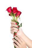 A mão 'sexy' da mulher com vermelho prega um grupo das rosas Imagem de Stock Royalty Free