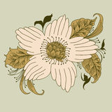Mão tirada, garatuja da flor, vetor Foto de Stock Royalty Free