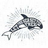 A mão tirada textured a etiqueta do vintage com ilustração do vetor da baleia de assassino Foto de Stock Royalty Free