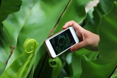 A mão usava o telefone e tomava imagens da natureza em GA foto de stock royalty free