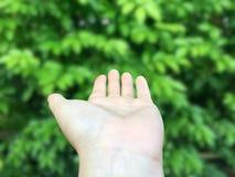 Mão vazia aberta da mulher acima no dianteiro na frente do fundo verde pequeno das folhas imagem de stock royalty free