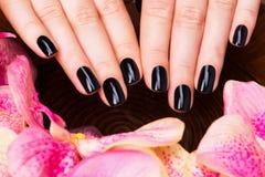 Mãos bonitas das mulheres com tratamento de mãos preto Fotografia de Stock Royalty Free