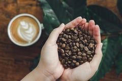 Mãos bonitas que guardam feijões de café como uma matéria prima para fazer a bebida de refrescamento do café útil para o corpo co imagens de stock royalty free