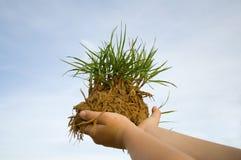 Mãos com ervas daninhas Fotografia de Stock Royalty Free