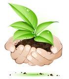 Mãos com folhas ilustração stock
