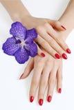 Mãos com manicure e a orquídea roxa Fotos de Stock Royalty Free
