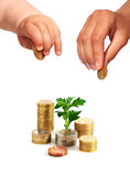 Mãos com moedas e planta. Imagem de Stock