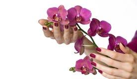 Mãos com a orquídea da terra arrendada do manicure Imagens de Stock Royalty Free