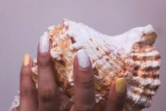Mãos com os pregos e shell manicured bonitos do mar Foto de Stock