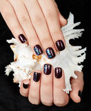 Mãos com os pregos manicured curtos coloridos com o verniz para as unhas roxo escuro que guarda um shell do mar Fotos de Stock